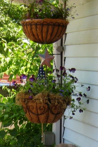 Pansy Hanging Baskets - 7/4/14