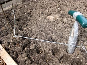 Planting Snow Peas! 4/6/15