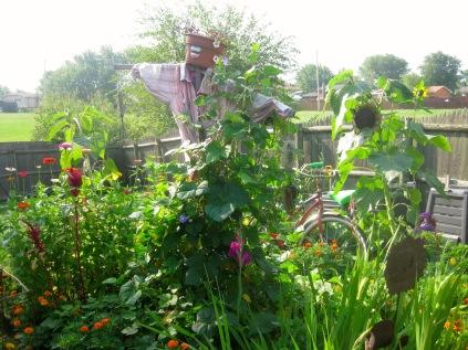 Mrs. Greenbeans and Cutting Garden, sunny