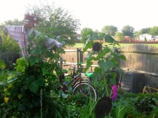 Mrs. Greenbeans and Bikes