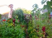 Side View of Bean and Tomato Beds