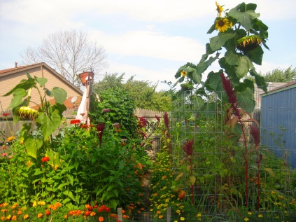 Kitchen Garden 2015 - 35 of 68
