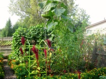Tomato and Bean Beds
