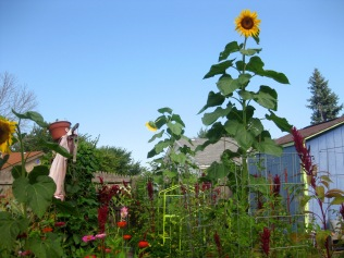 Mrs. Greenbeans with Sunflowers