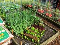 2014 Lettuce Bed