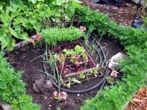 2011 Lettuce Bed