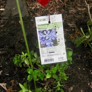 Plants bought at a native plants sale - 8/28/14