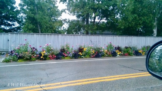 colorful border of annuals